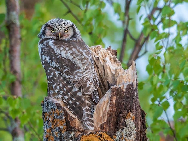 Birdwatching excursions in Finland