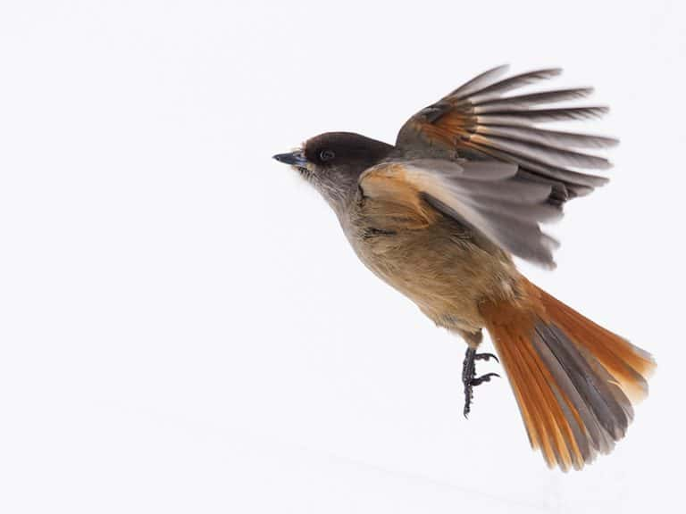 small birds - photography opportunities